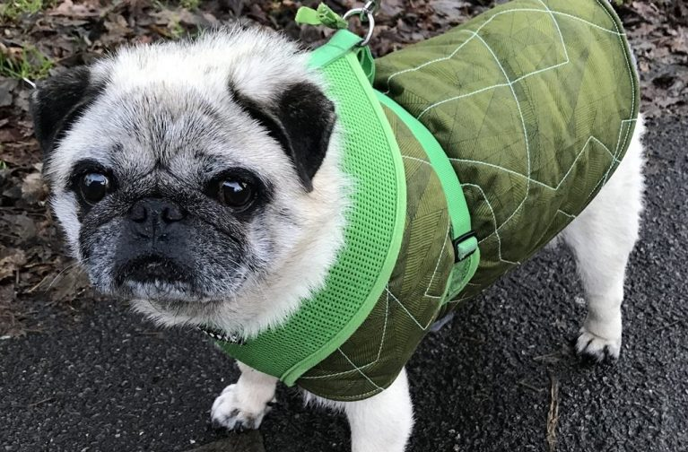 Nicholas Ball: Snug and Stylish Dog Coat